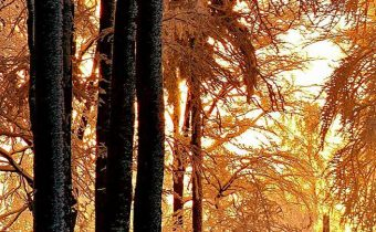 Čaro zimného lesa :) autor fotografie: Markéta Black